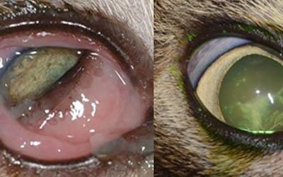 oftalmologia con chirurgia oftalmica