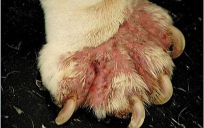 Cure dermatologiche veterinarie