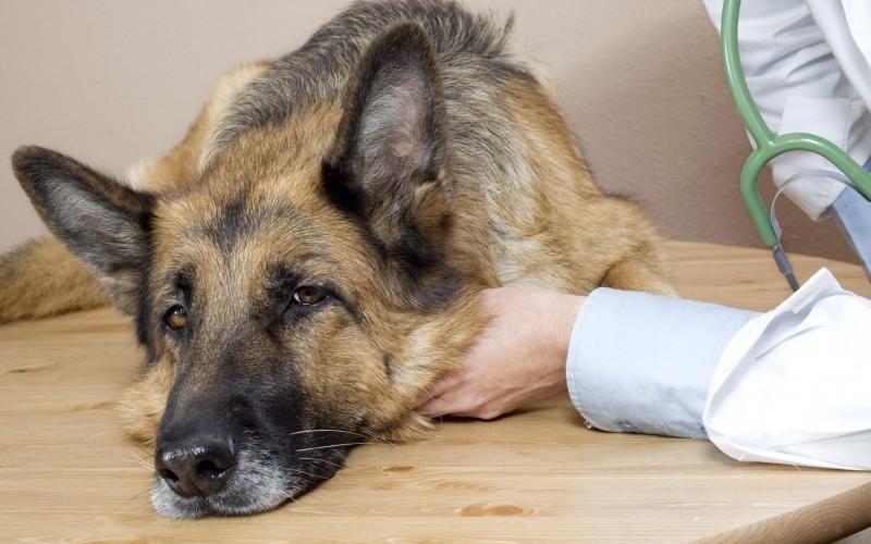Trattamenti di medicina veterinaria interna