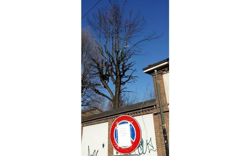 manutezione albero