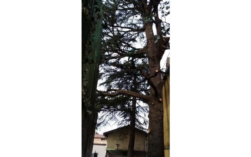 sistemazione albero