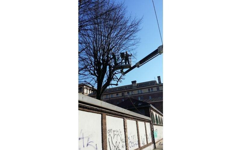 potature albero