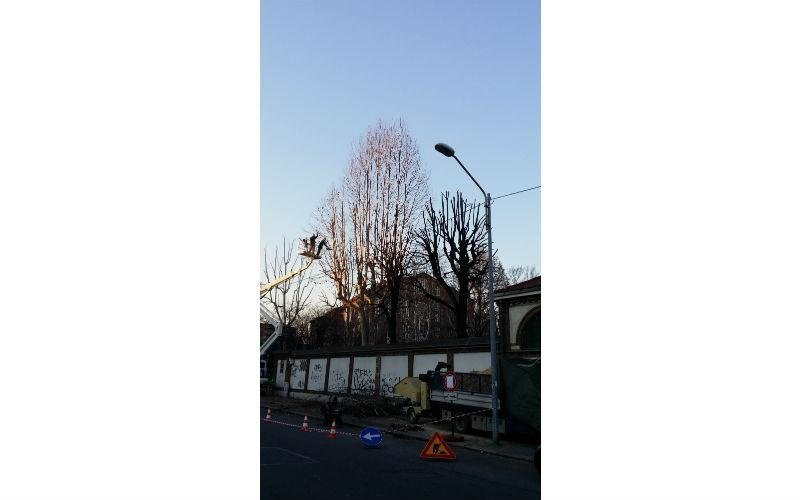 trattamento albero