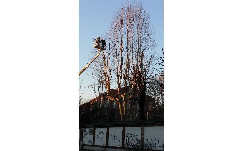 intervento albero