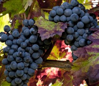 analisi del vino, vino, analisi enologiche