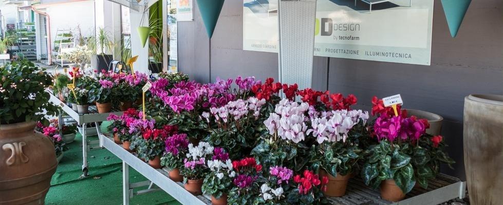 piante e prodotti agricoltura
