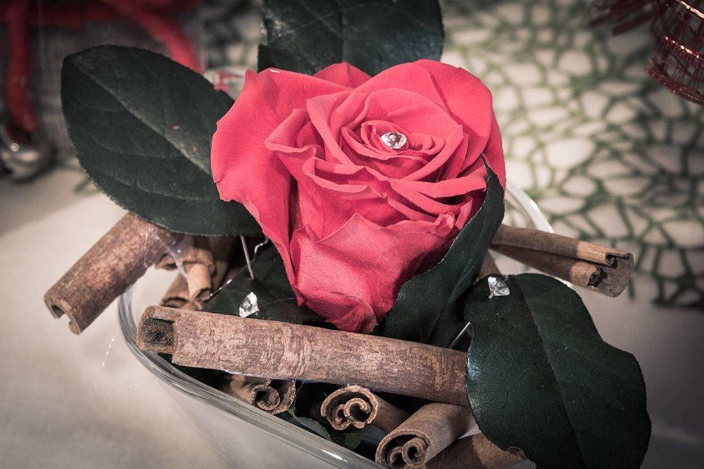 Ciotola con foglie verde, legno e una rosa rossa