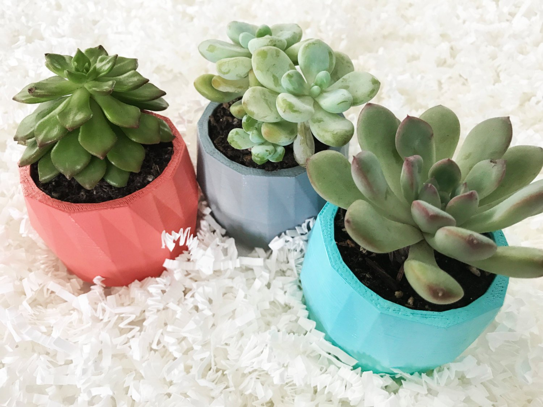 Gift Set of 3 Designer Modern Geometric Mini Succulent Planters