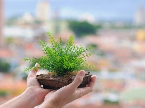 vivaio piante