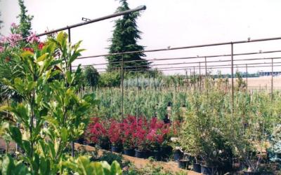 vivaio piante rare