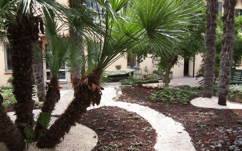palme giardino