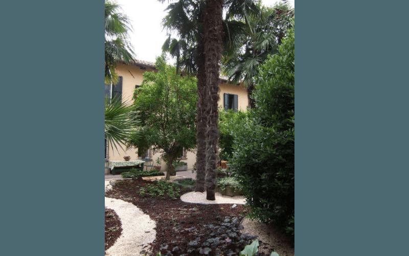 palma giardino