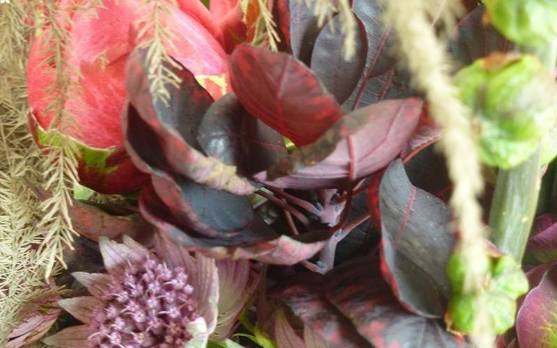 Vendita fiori e piante Riva del Garda