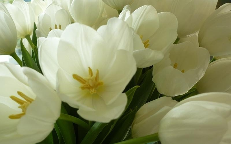Creazioni floreali per matrimoni Riva del Garda