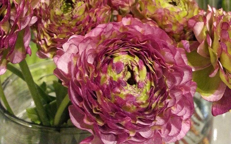 Vendita fiori Riva del Garda