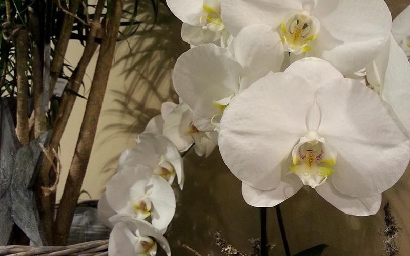 Creazioni floreali Riva del Garda
