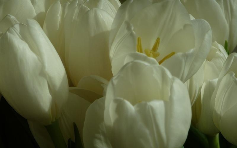 Vendita fiori e bouquet Riva del Garda