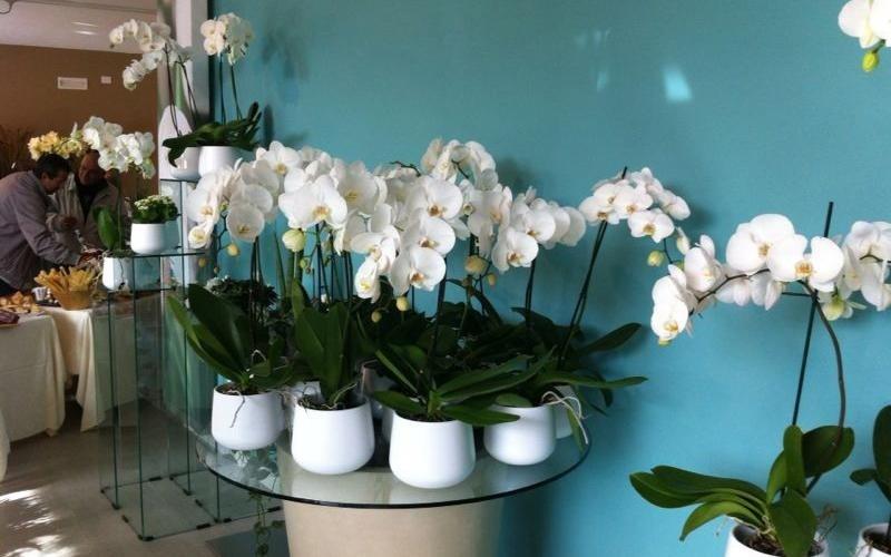 Fiori e piante esotiche Riva del Garda