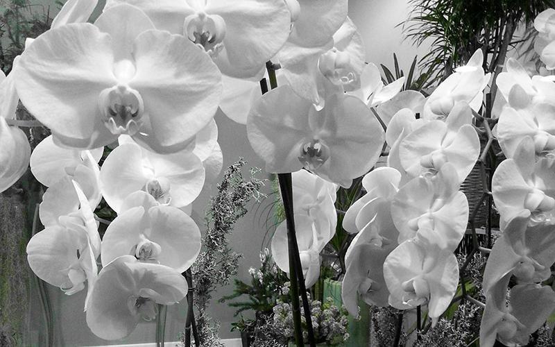 Composizioni floreali Riva del Garda