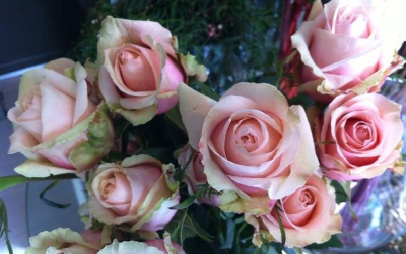 Vendita rose Riva del Garda