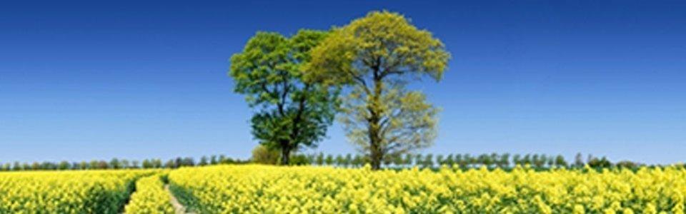 Fondo europeo per sviluppo rurale