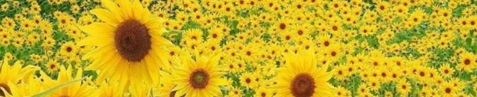 I fiori di Tamara