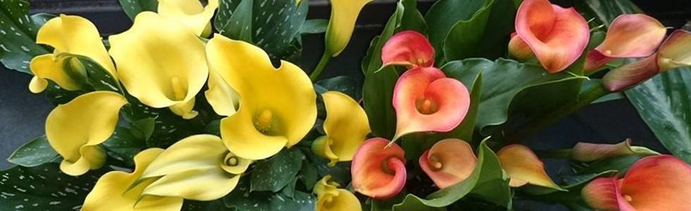Negozio fiori Sant