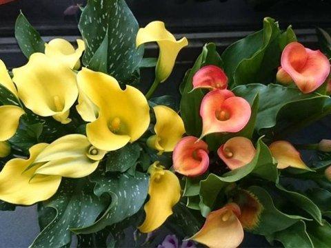 Negozio fiori Sant'Agata Li Battiati