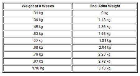 Chihuahua Growth Chart Metric Units