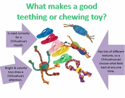 Collection of teething toys for Chihuahua
