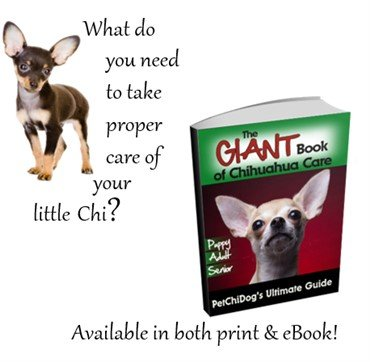Chihuahua age milestones for the puppy adult and senior you will feed him healthy foods you will make sure he has comfort you will keep him safeyou will allow him to live a long happy life fandeluxe PDF