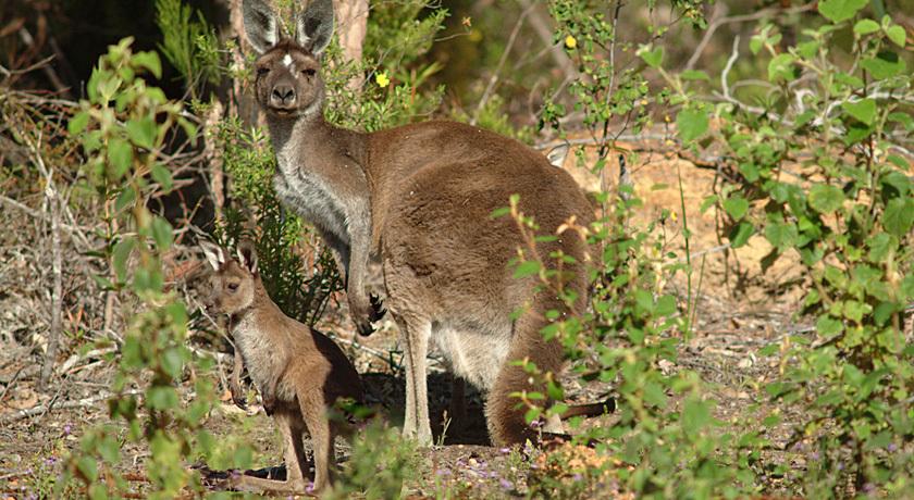 Australian wildlife need no introduction