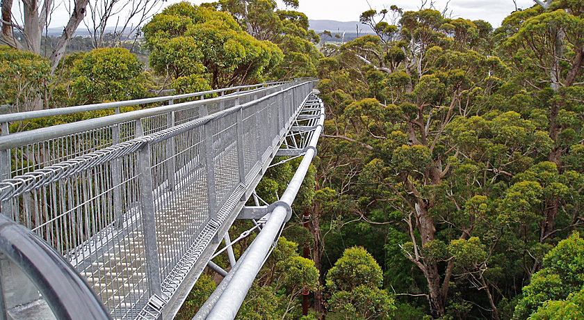 The original Tree Top Walk. A short drive to a unique experience