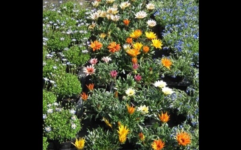 Piante Aromatiche Perenni Elenco : Vendita di piante aromatiche e perenni padova carraro