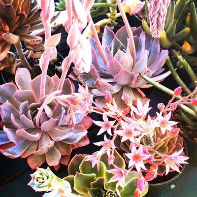 Succulent workshop petaluma sonoma san francisco
