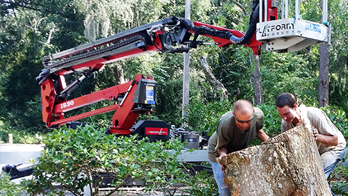 Tree Removal Fernandina Beach, FL