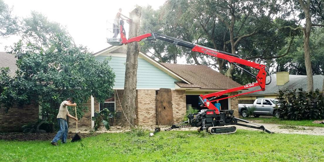 Palm Tree Removal Fernandina Beach, FL