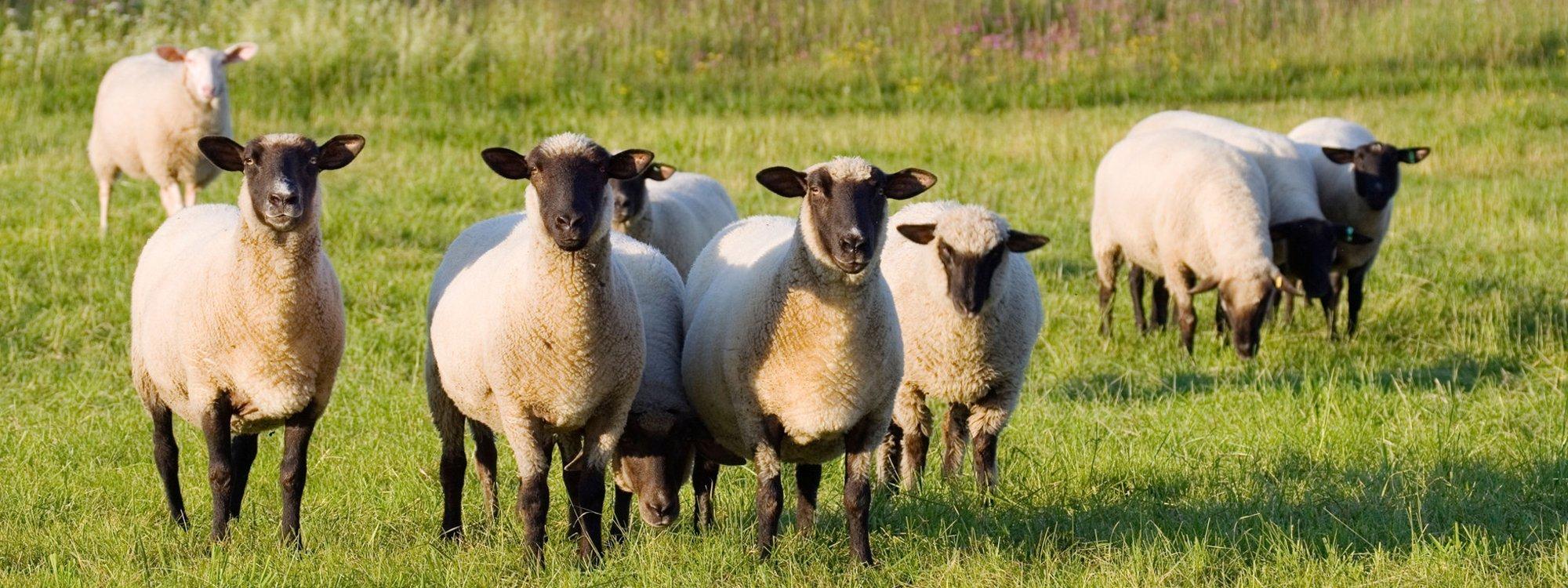 Farm animal treatments