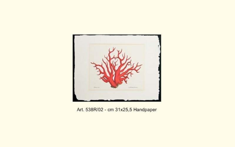 stampa alga rossa
