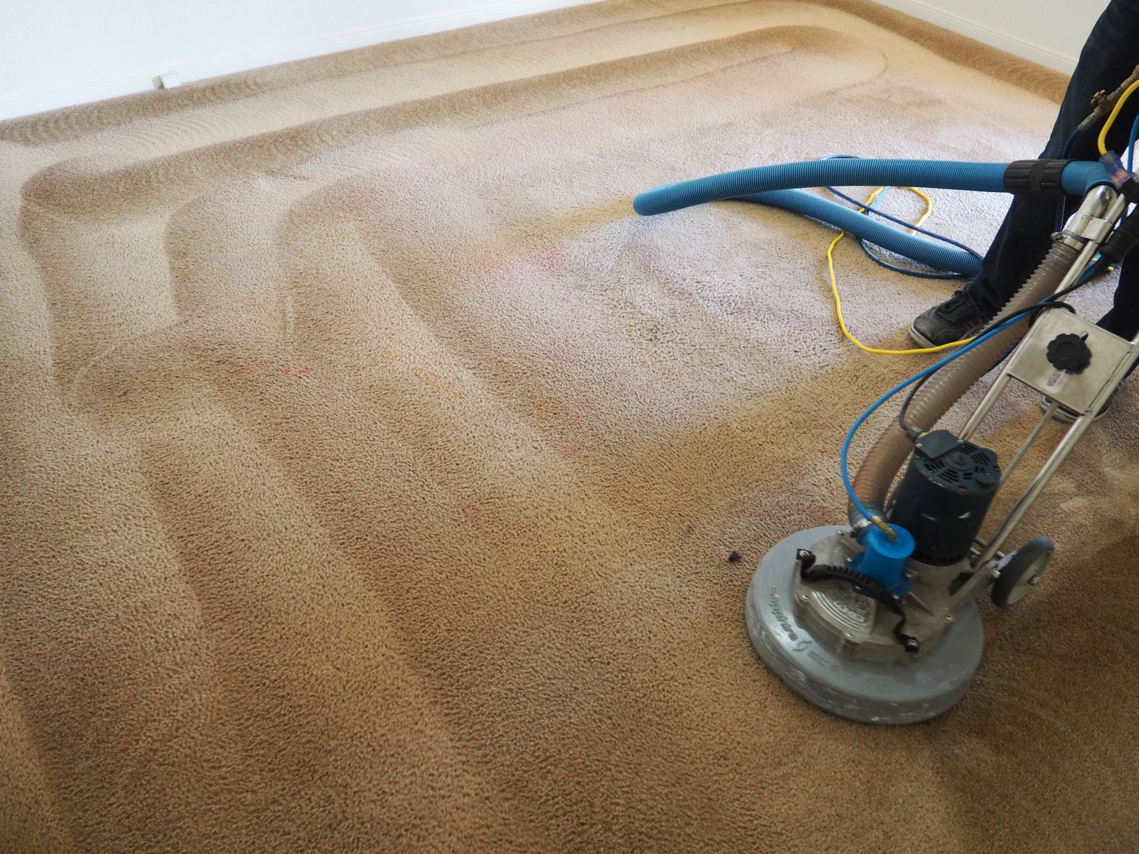 Ace Carpet Cleaning Gallery Image Killeen Texas Fort Hood Clean