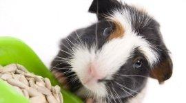 criceti, degenza animali esotici, pensione animali esotici