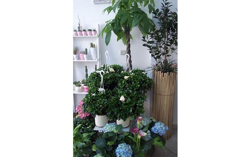 vendita piante