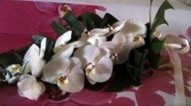 commercio fiori freschi