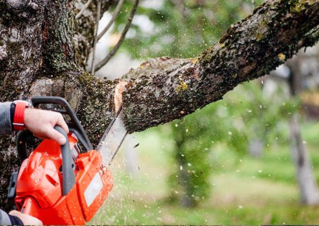 Man cutting trees using an electrical chainsaw