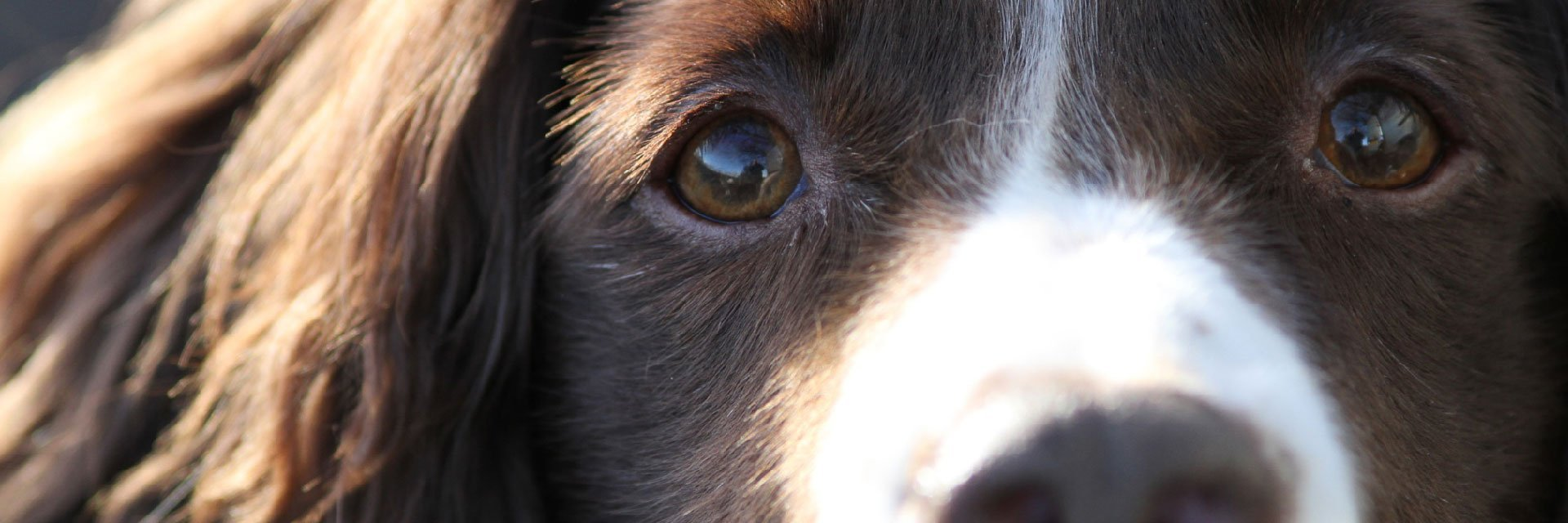 closer view of the dog's eyes