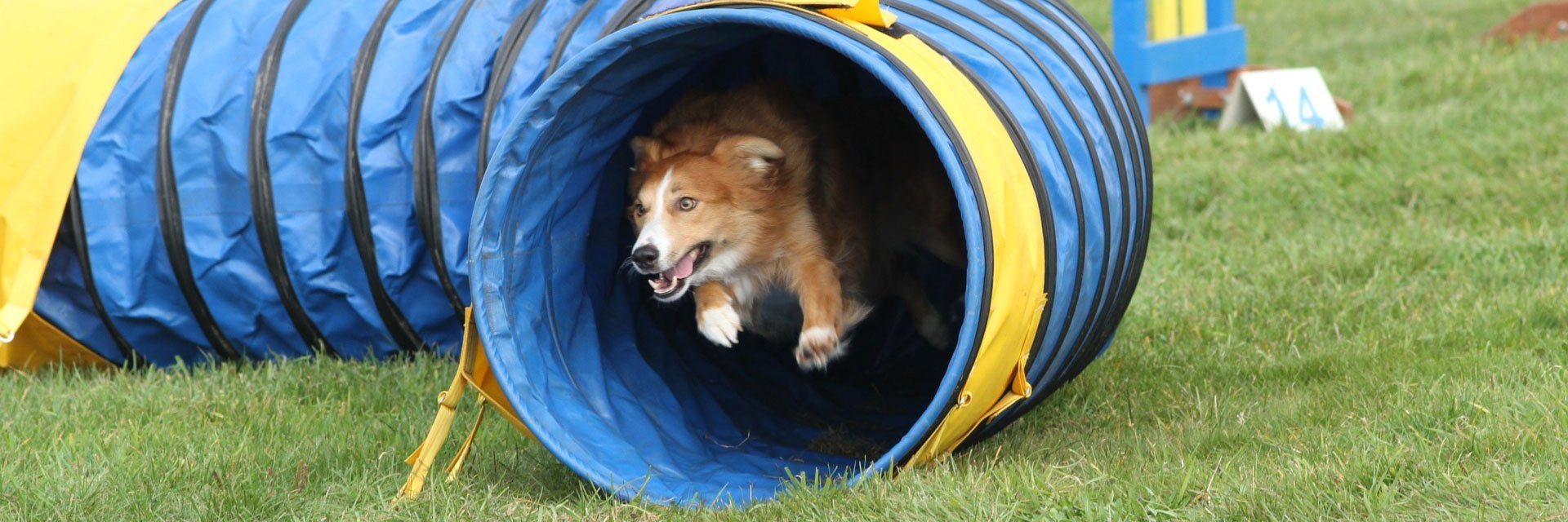 dog inside the tunnel