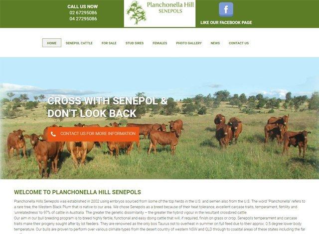 Planchonella Hill Senepols