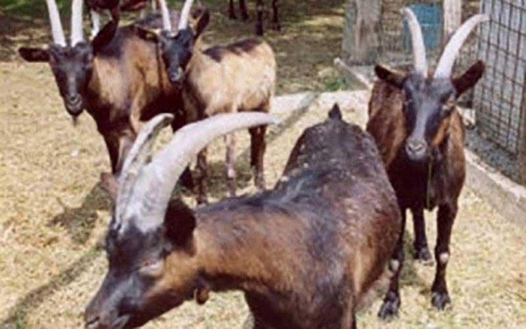 allevamento animali cascina