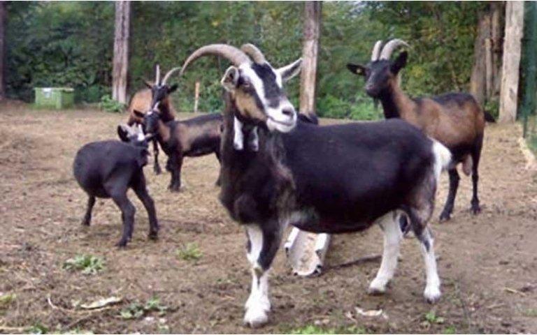 allevamento animali agriturismo