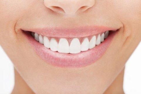 Dentista controlla un modello in 3D di denti e gengive